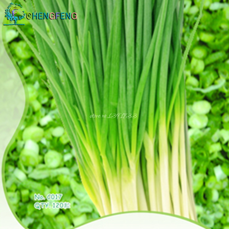 Original Pack 100 Seeds / Pack, four seasons onion seeds,Seasons shallot seeds,Chives,Seasons onion plants, balcony vegetables(China (Mainland))
