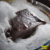 Чистые натуральные Polygonum multiflorum ручной Холодной Процесс мыло шампунь/утолщаются волосы Против Перхоти уход за волосами Китайской Травяной