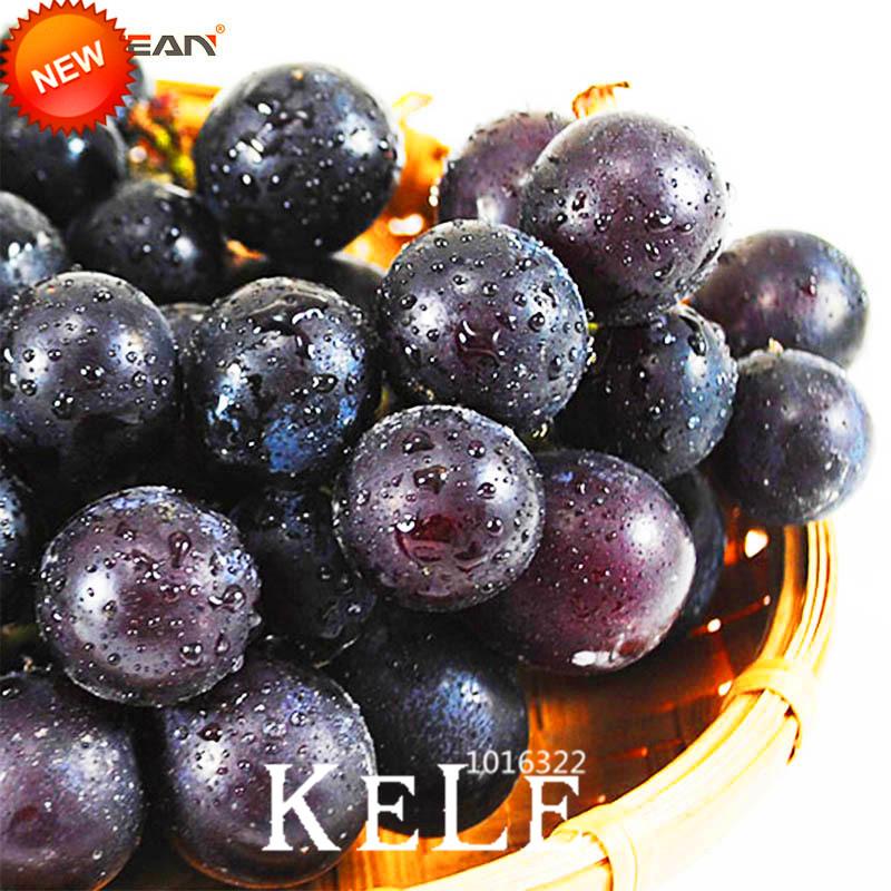 Big Sale!100 Seeds/Bag Sweet Kyoho Grape Seeds Advanced Fruit Natural Growth Grape Delicious Fruit Plants,#EUE2RY(China (Mainland))