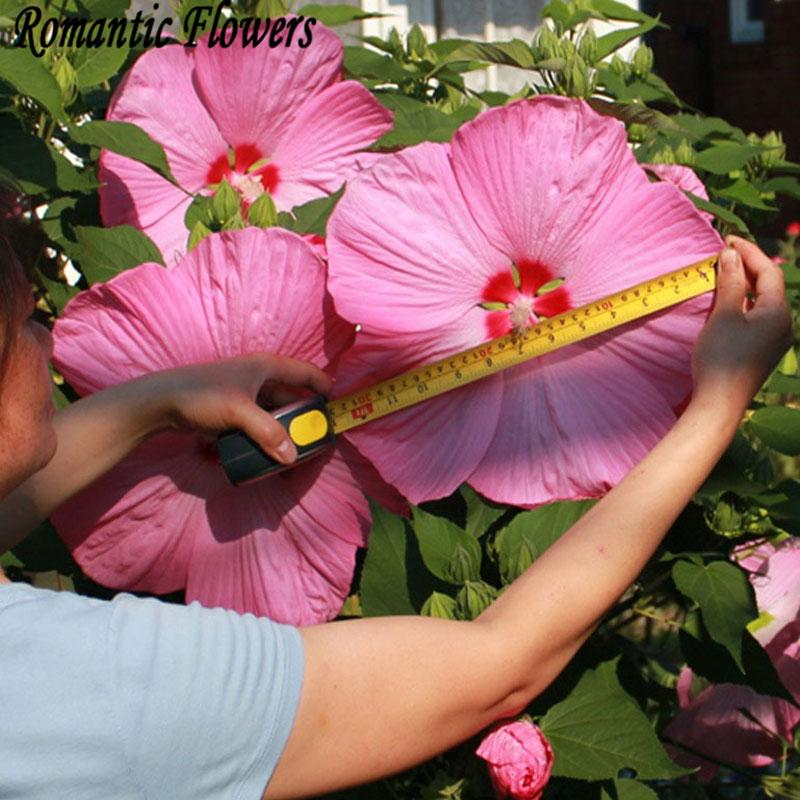 achetez en gros hibiscus graines de fleurs en ligne des grossistes hibiscus graines de fleurs. Black Bedroom Furniture Sets. Home Design Ideas