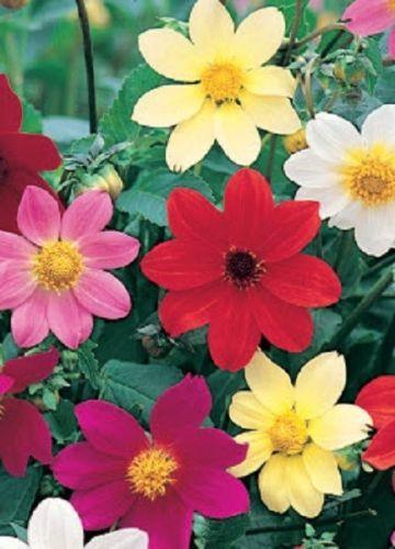 Дизайн гаммы цветов