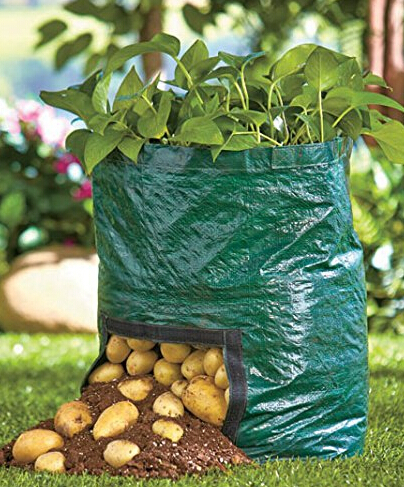 Free shipping pe planting bag home gardening vegetable - Planter tomates cerises en pot ...