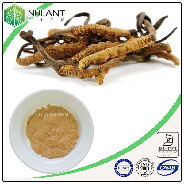 500g high quality Fungi extract- Cordyceps Sinensis Extract 40% Polysaccharides sample pack<br><br>Aliexpress