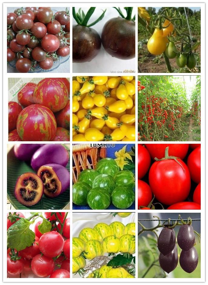 Home&garden fruit seeds many kinds Tomato Seed 100pcs/bag seeds vegetables case e jardim bonsai seeds+ a free gift(China (Mainland))