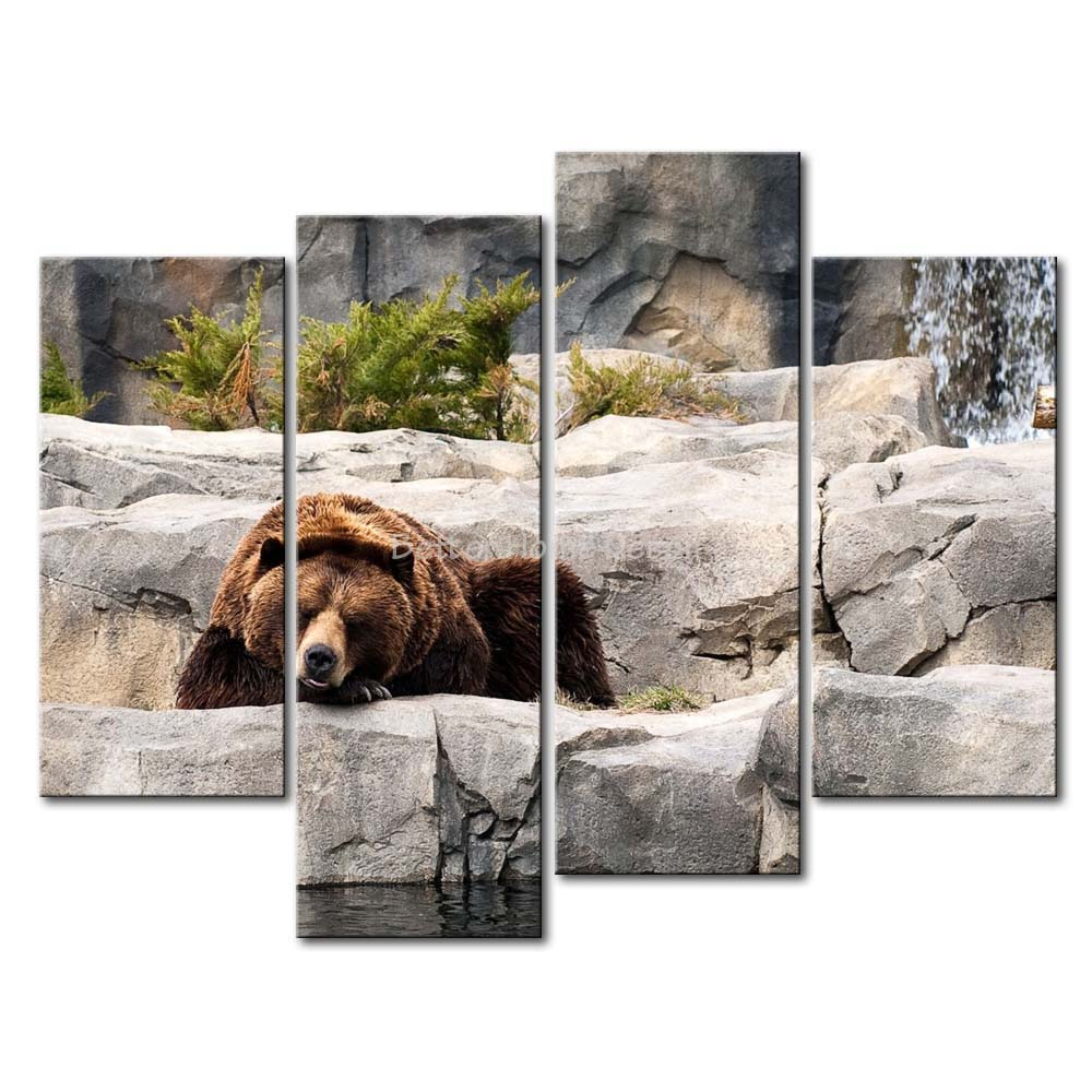 grizzly bear resting in - photo #39