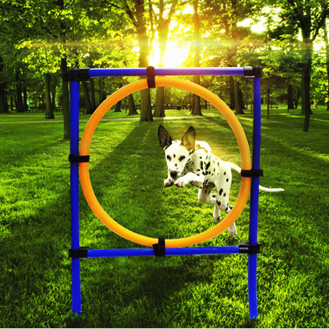 Pet Training Supplies Dog Jump Ring Training Sensitivity Jumper Dog Outdoor Sports Equipment +Free shipping(China (Mainland))