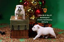 Para a Coleta de 2 pçs/set 1/6 Mr. Z NO. 021 Inglês Bulldog 4.0 Figura de Brinquedo Modelo Animal YD001-YD006 Canis Familiaris Figura Presente(China)