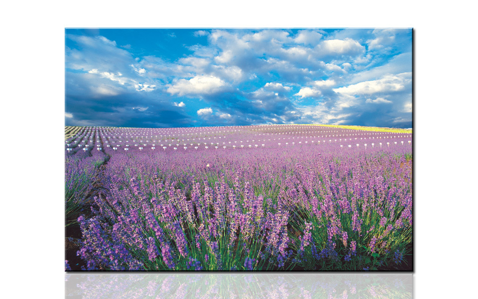 H746 Endless lavender flower field, large HD canvas print painting artwork, wall art picture photo for living room, drop ship