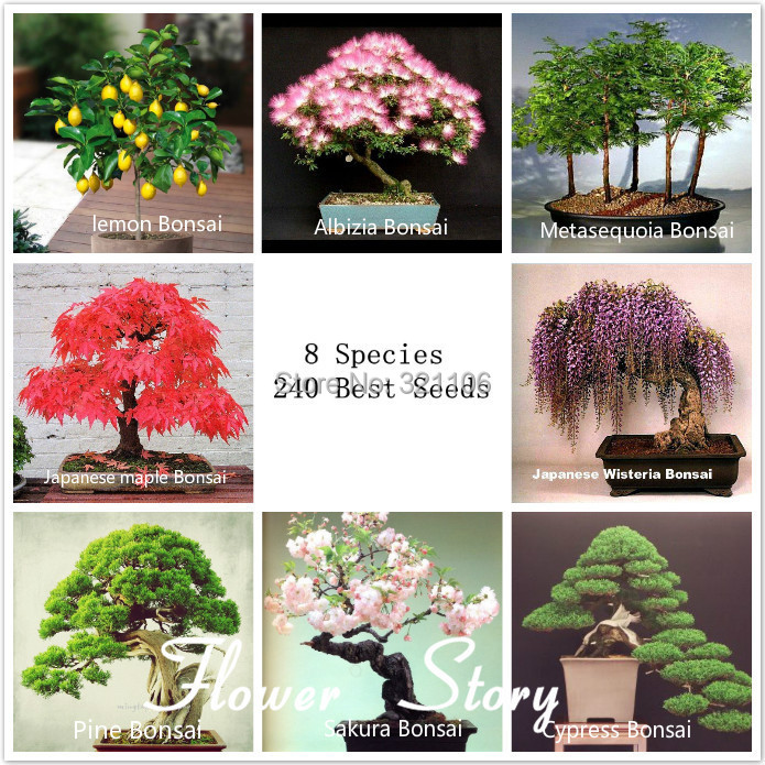 8 kinds Bonsai Tree Seeds, 240 seeds, Perfect DIY Home Garden Bonsai package , Free shipping+free gift(China (Mainland))