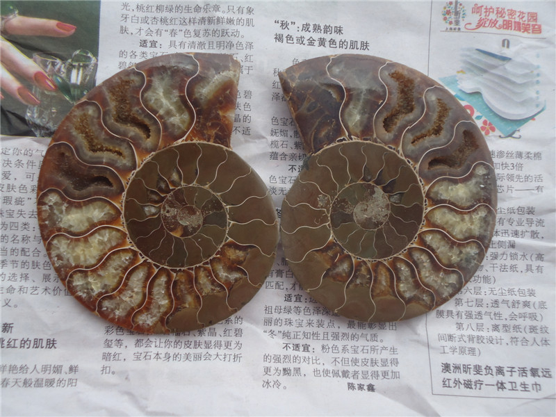 190g NATURAL CUT CRETACEOUS AMMONITE FOSSIL Sliced MINERAL SPECIMEN 2PCS/LOT(China (Mainland))