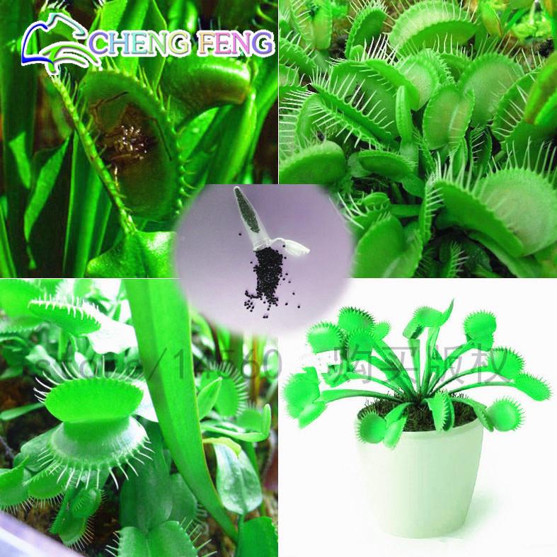 Vert g ant arbre promotion achetez des vert g ant arbre for Livraison fleurs pas cher livraison gratuite