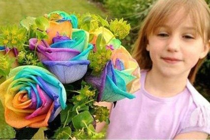 Buy 100 seeds rare holland rainbow rose for Where can i buy rainbow roses