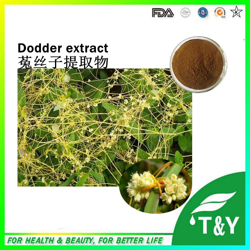 Top quality Chinese Dodder Seed extract &amp;Chinese Dodder Seed P.E.500g/lot<br><br>Aliexpress