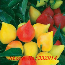 ``Hot `100pcs Chilly Red Hot Peter Pepper seeds chilly seed novelty funny peppers Bonsai plants Vegetable Seeds for home & garde(China (Mainland))
