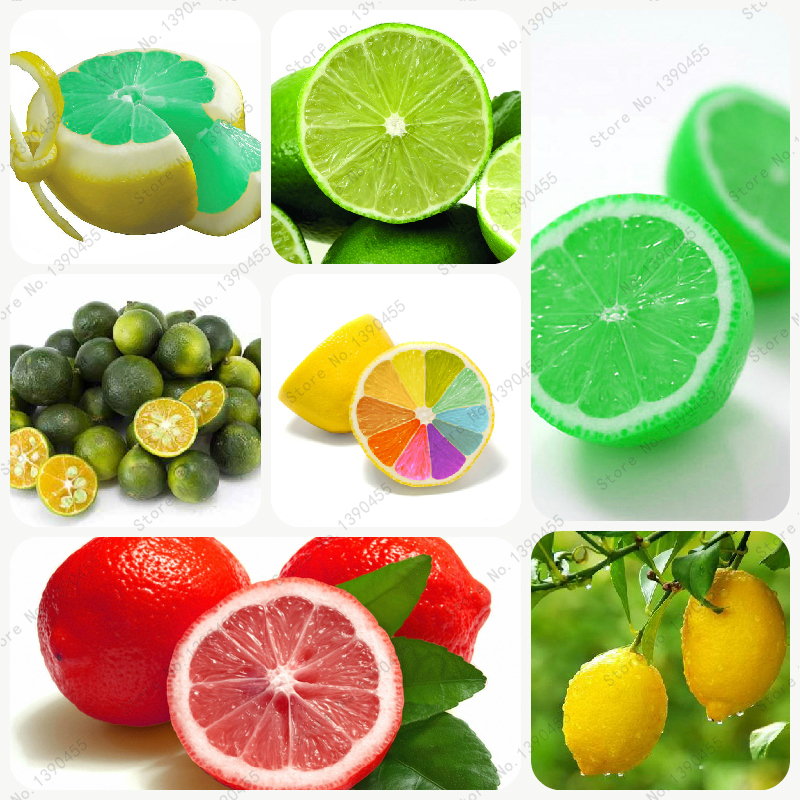 10pcs rare rainbow lemon seeds organic fruit lemon seeds home garden fruit plant 10pc colorful Bonsai Lemon Seeds ,can be eaten!(China (Mainland))