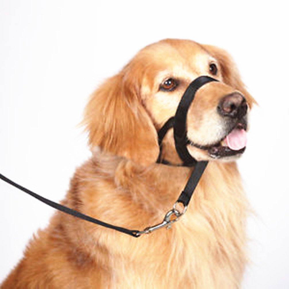 nose leash | wickedadickted | Flickr