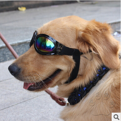 Cool dog pet glasses Pet sunglasses sunglasses The dog glasses prevent waste their goggles(China (Mainland))