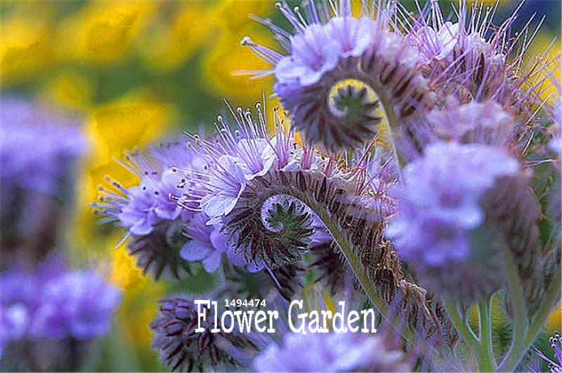 Ape fiore semi promozione fai spesa di articoli in for Vendita semi fiori