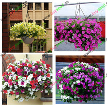 free shipping Flower seeds plant hanging petunia seeds balcony 50  -200 pcs