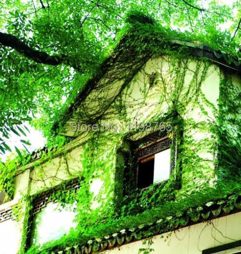 Карликовое дерево Leean 30 /100% DIY flower seeds карликовое дерево vegetable seeds 100