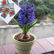 10 Bags / Package , Home Gardening Pesticide Carbendazim Fungicide , Hyacinth Bulbs Potted Flowering Plants Dedicated 10g(China (Mainland))
