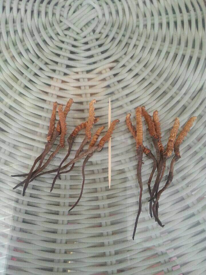 Здесь можно купить  Cordyceps Sinensis (Yarsagumba)   Красота и здоровье