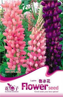 Free shipping, 15 lupin The appearance of seeds Mother flowers mixed color high germination rate For cut flowers flowers Design(China (Mainland))