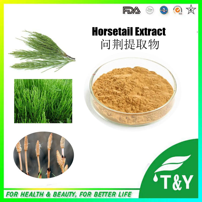 Low price Horsetail grass extract &amp; Horsetail grass powder &amp; Horsetail grass P.E. 800g/lot<br><br>Aliexpress