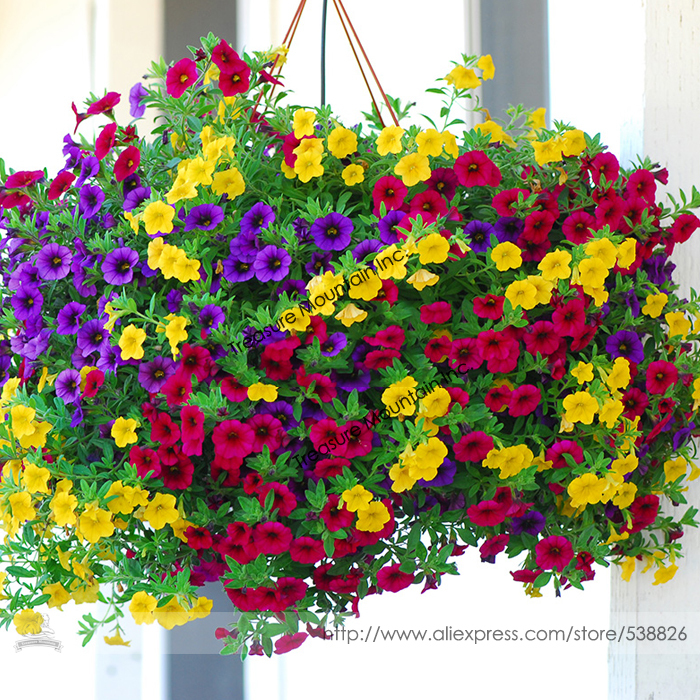 Heirloom Hanging Petunia Mixed Seeds, Professional Pack, 200 Seeds / Pack, Very Beautiful Garden Flowers Light Up Your Garden