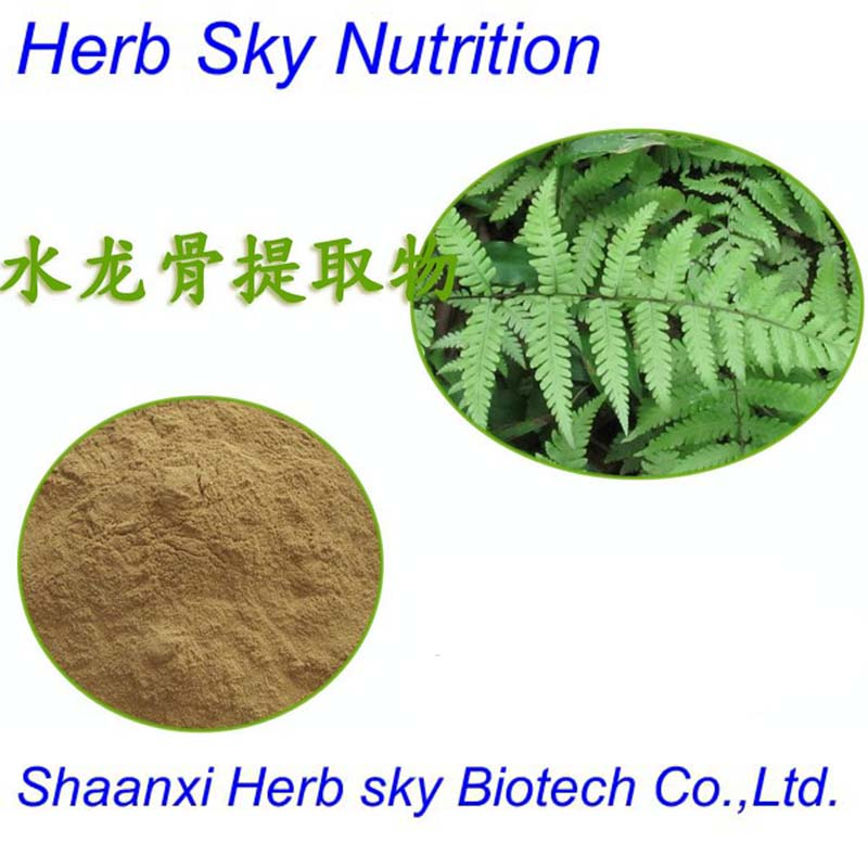 100% Natural Wall Fern Extract 10:1 used in Pharmaceutical Field 100g/lot<br><br>Aliexpress