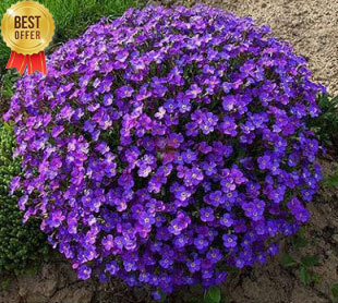 LOSS PROMOTION!!!200 PCS Perennial Outdoor Novel Plants, bonsai violet flower seeds,Very Beautiful and Easy to DIY home Garden(China (Mainland))