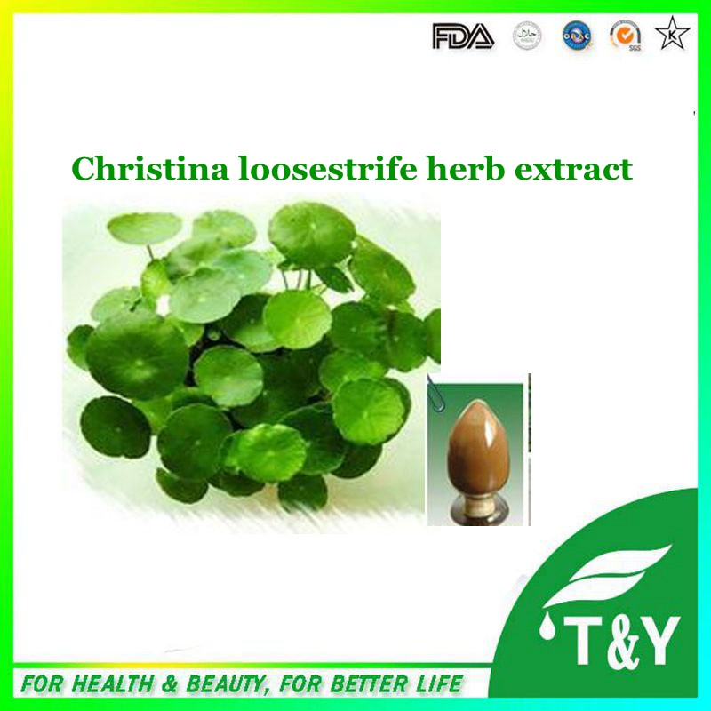 On Sale! China reliable factory supply christina loosestrife herb extract with best quality 800g/lot<br><br>Aliexpress