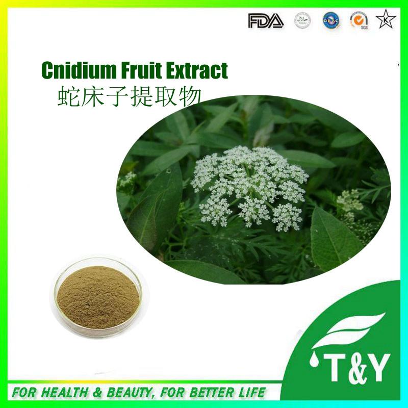 herbal Sex supplement enhancement Cnidium Monnieri Extract/cnidium monnieri fruit powder extract 400g