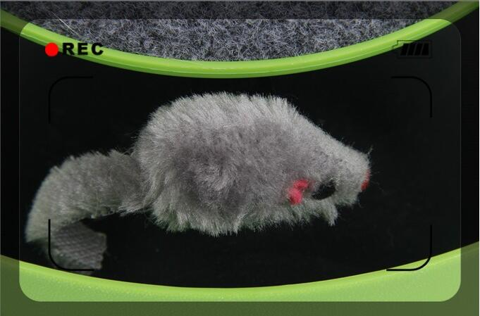 Catch the Mouse Motion Toy for Cats