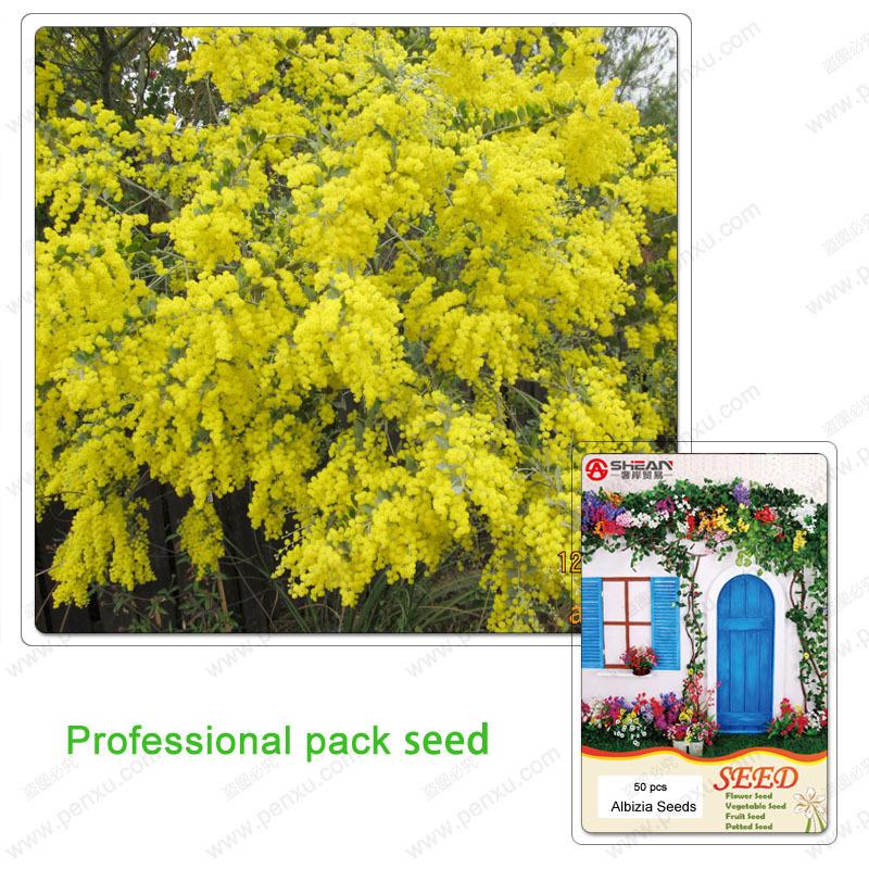 1 Professional pack / 50 seeds Golden Albizzia seeds beautiful Golden acacia tree Yellow Albizzia flower Seeds bonsai(China (Mainland))