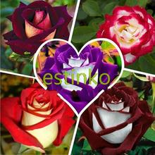 100pcs/bag Rare Rose Seeds 5 Different Colors Rare Osiria Rose Heirloom Chinese Rose Flower Seeds Flowers Home Garden(China (Mainland))