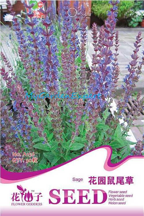 Продажа садовых шалфей семян 30pcs/мешок цветок