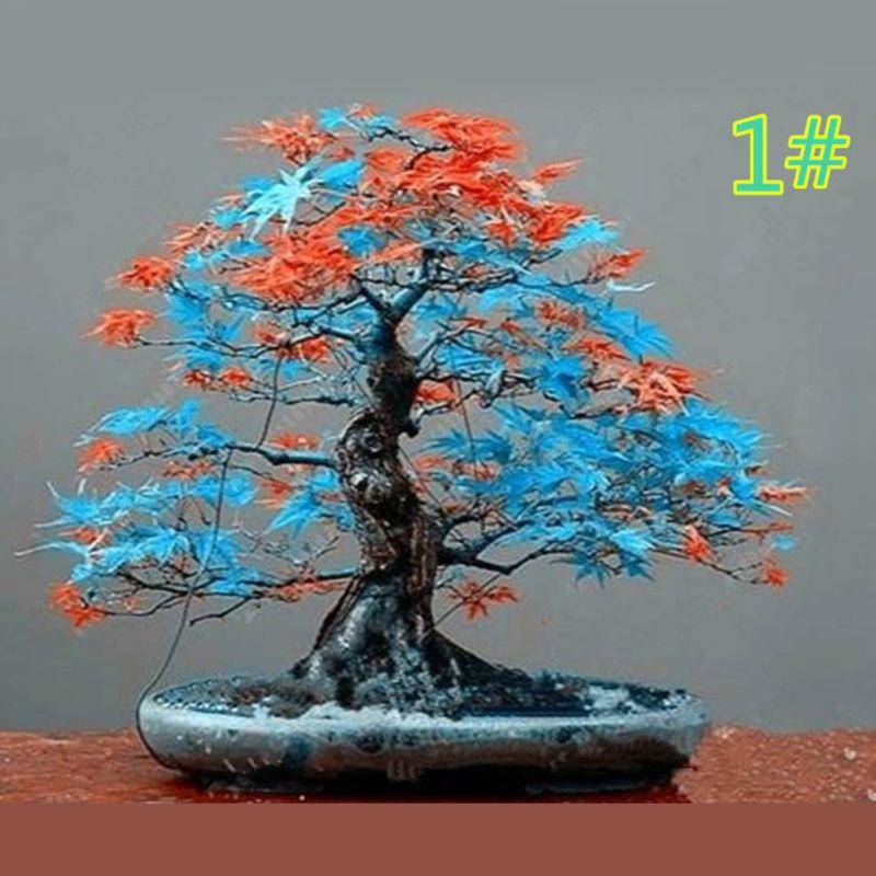 Gwxevce 20 Unids Semillas de Arce Japon/és Bonsai DIY Planta Maceta Hojas de Colores Creativo Hogar Hogar Mini Jard/ín Decoraci/ón Semillas de Arce