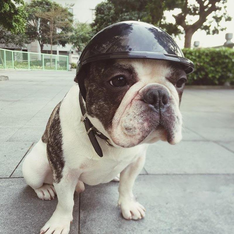 Dog pet Helmet Hat Cap Dog Cat Costume Accessory Pet Supplies motorcycle ABS Plastic dog toy Helmet cap three sizes Pet Product(China (Mainland))