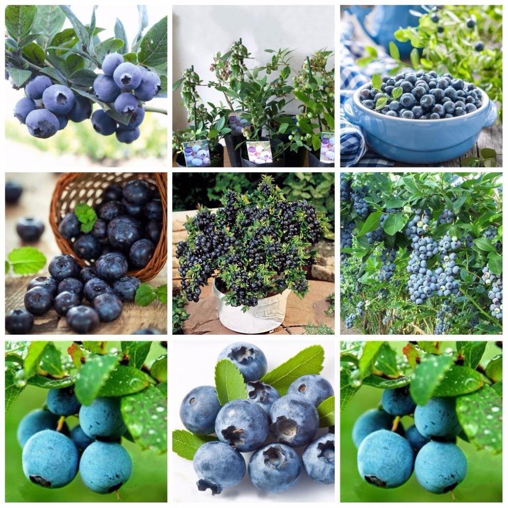 online kaufen gro handel bonsai baum t pfe aus china bonsai baum t pfe gro h ndler. Black Bedroom Furniture Sets. Home Design Ideas